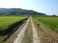 中村さんの隣接する田圃の農薬使用状況
