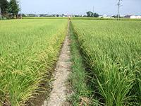 反町さんの隣接する田圃の農薬使用状況